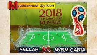 Муравьиный футбол ● Fellah VS Myrmicaria ● ANTS FIFA 2018