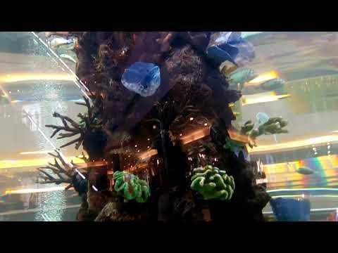 Aquarium In INOX GVK One Mall(1)