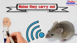 Dr Bug: Signs of Mice Infestation - Mice Control in Gilbert Arizona - Mice Exterminators