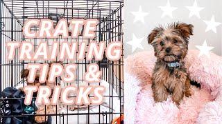 PUPNAPS DOG BED REVIEW + CRATE TRAINING TIPS & TRICKS | DOG VLOG
