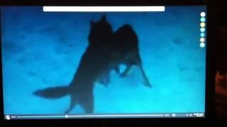 Жестокость к животным в кинематографе.
