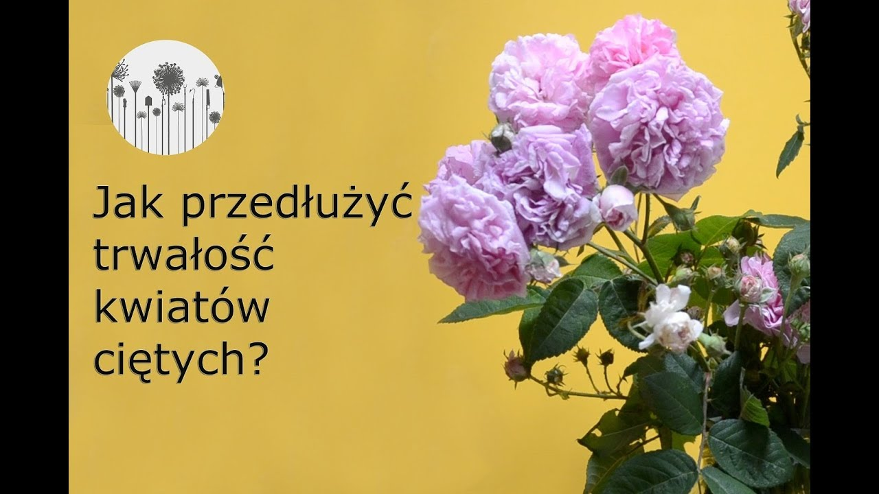 Roze W Wazonie Jak Przedluzyc Trwalosc Kwiatow Cietych W Wazonie Youtube