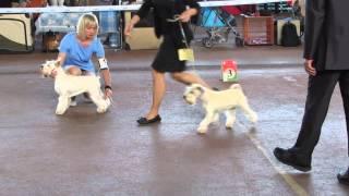 Международная выставка собак CACIB ''AUGUST'' - 30.08.2015. ЛК.  Minsk