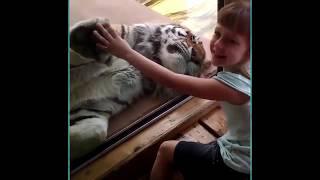 Animals vs Kids | Animals Scaring Kids At Zoo | Animals Love To Scare Cute Kids | KillerZBaBa Vines