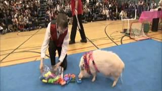 Pig Genius : Top 10 Most Talented Pets