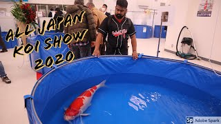 All Japan Koi Show 2020 Join us for a look around!