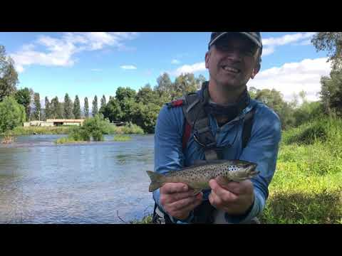 Dry Fly Fishing The Goulburn River