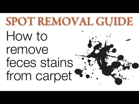 How to Clean Feces stains from Carpet   Spot Removal Guide