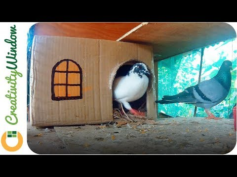 Couple Pigeon House Made Out of Corrugated Fiberboard Box