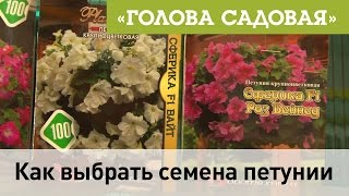 Голова садовая - Как выбрать семена петунии