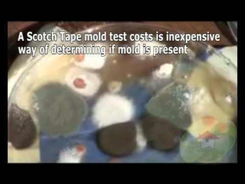 melbourne-mold-removal