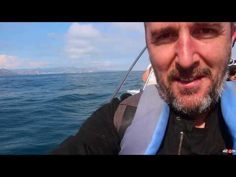 Александр Sandro Кирьяков: Дельфины в открытом море! Смотрите. Живой Крым