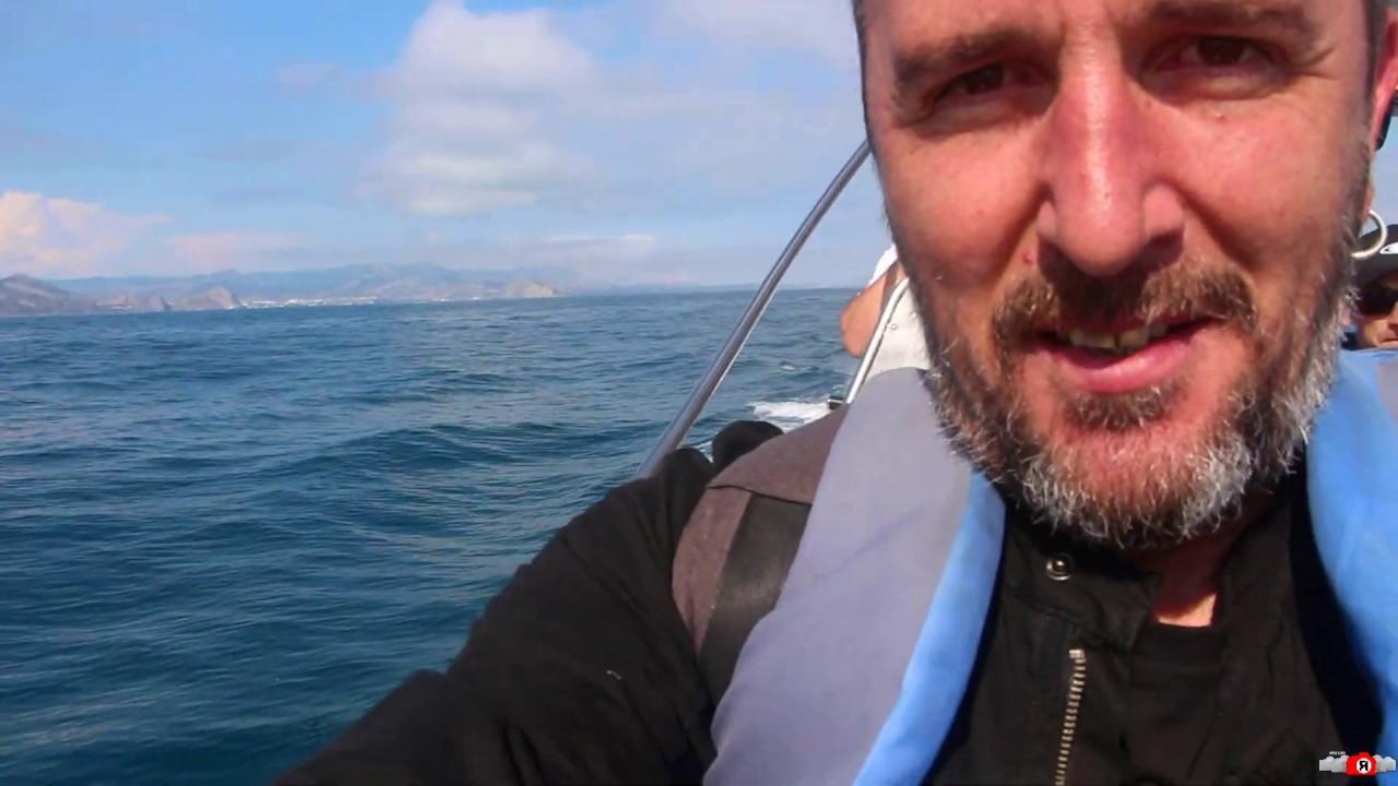 Дельфины в открытом море! Смотрите. Живой Крым - YouTube