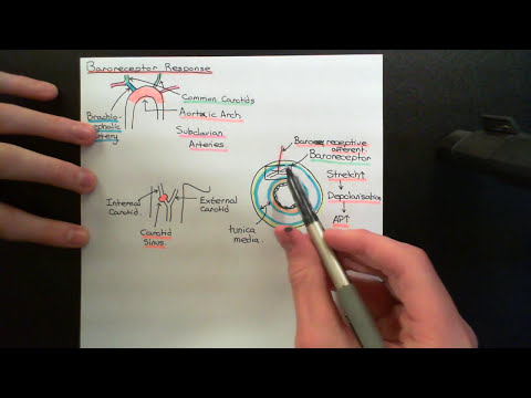 Control of Blood Pressure and Blood Volume Part 5