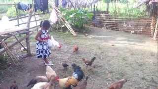Native Chicken, Goose & Duck Free Range (March 24, 2013)