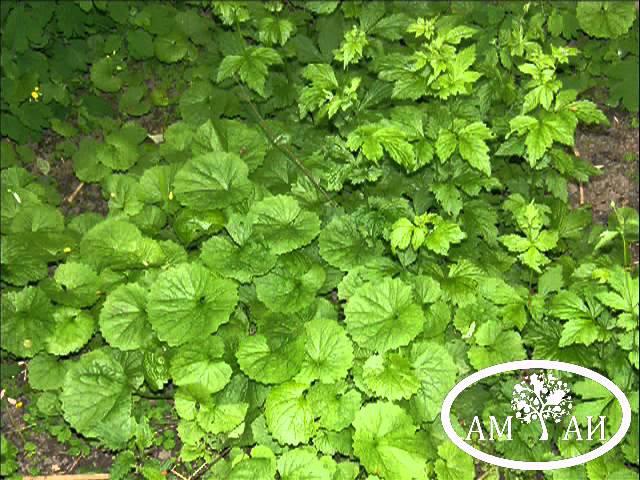 Граунд от сорняков: инструкция по применению.