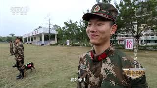 《军事纪实》 20191009 军犬奇兵| CCTV军事