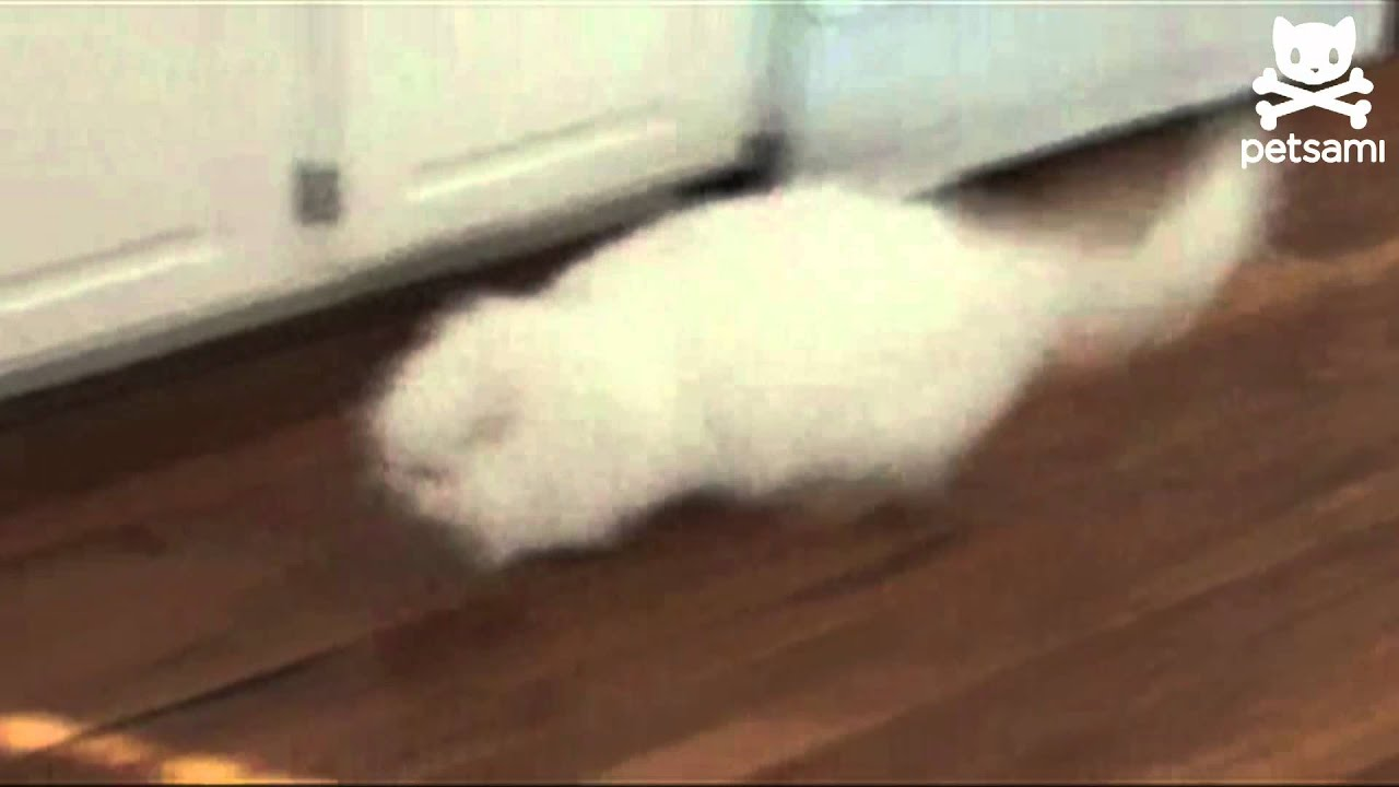 Security alarms funny cats videos by Waggle TV