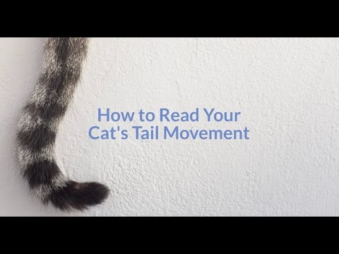 Why Do Cats Flick Their Tails?