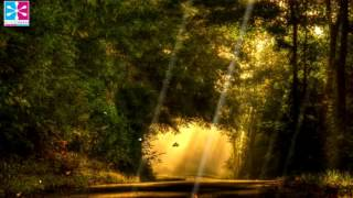 Meditation Music, Instrumental Music, Relaxing Guitar Music, Stress Relief Music, Relax Music,