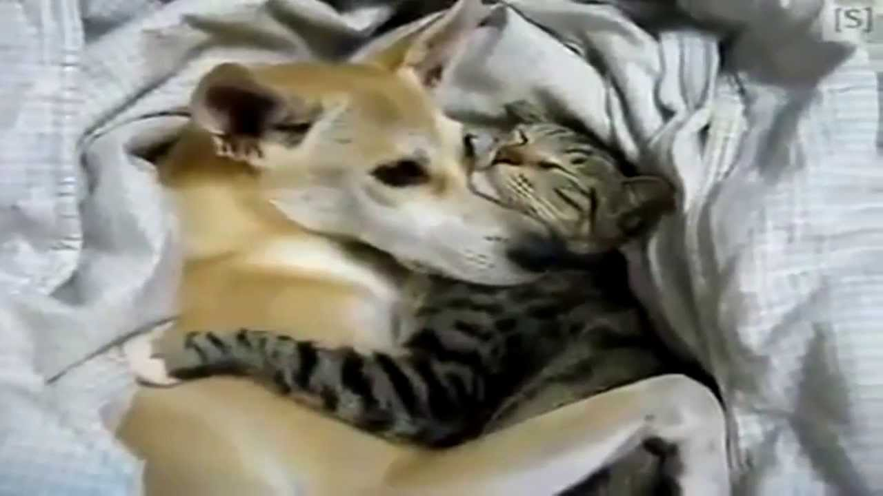 Sweety Dog Cling And Cat Cling Sleeping Together Sevgilisine