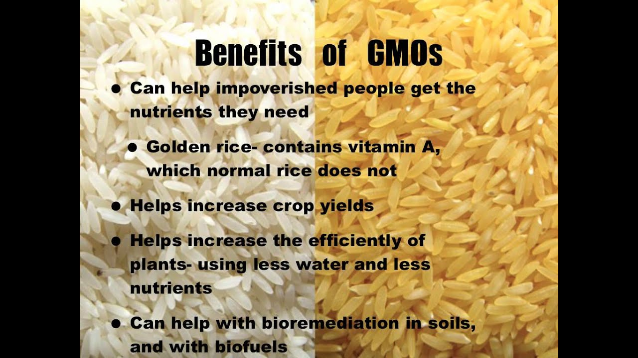 the benefits and risks of genetically modified organisms The ethics of genetically modified organisms campus safety  risks and benefits of gmos  of genetic engineering of plants and animals are greater than the risks .