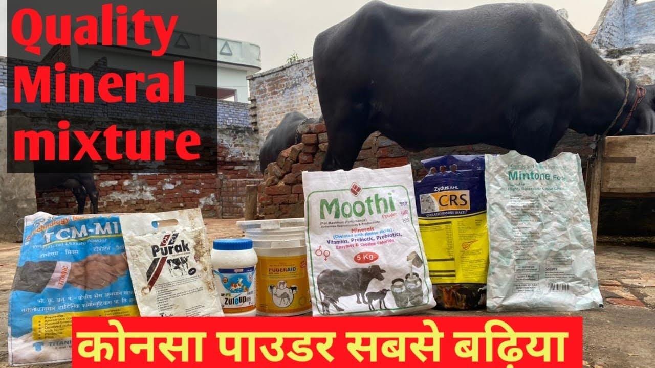 क़द , वज़न और संपूर्ण विकास होगा ये सबसे बढ़िया पाउडर है 😍 Best mineral mixture for Buffalo & cow