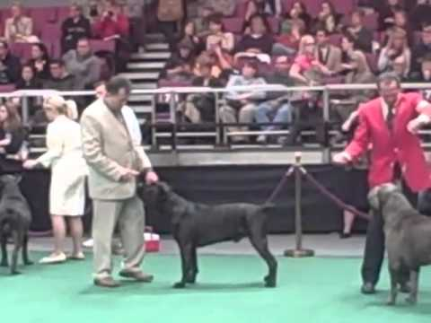 Westminster Dog Show Youtube