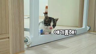 집사랑 대화하는 놀라운 아기고양이