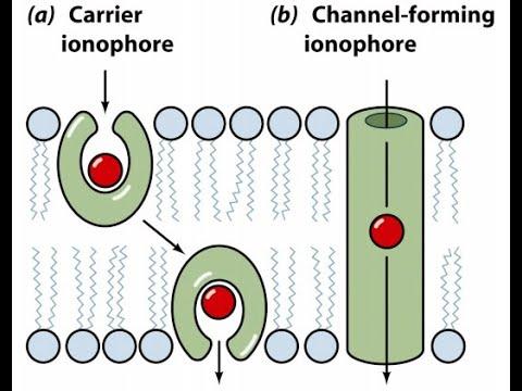 Bioinorganic Chemistry/ Class