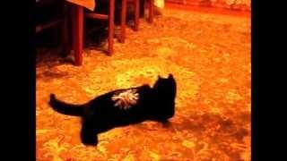 Кошка Маруська и валянки