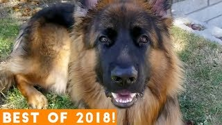 Download BEST ANIMALS OF 2018 Pt. 2  | Funny Pet Videos Mp3 and Videos