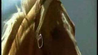 The Horse Whisperer - Video&Music