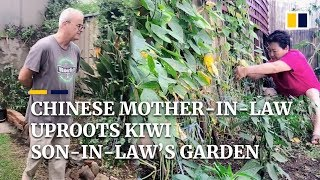 Chinese mother-in-law uproots Kiwi son-in-law's garden, turns it into her own vegetable farm