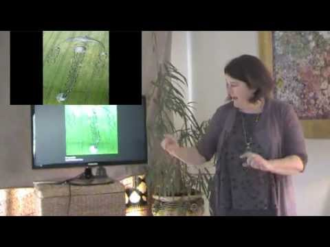 Crop Circle Counsel with Marien Grace