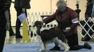 Ch Keswicke Bird In The Hand Wins Best Field Trial Dog In Show!