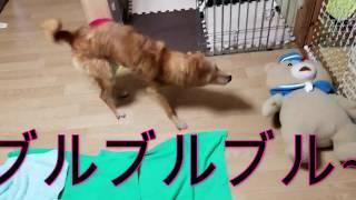 お風呂上り!! thumbnail