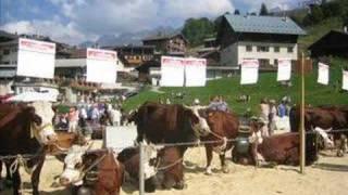 montage des vaches de savoie