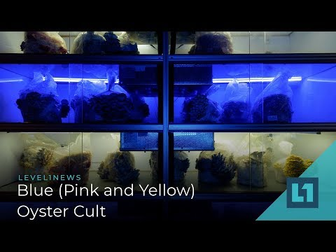 Level1 News February 22 2019: Blue (Pink And Yellow) Oyster Cult