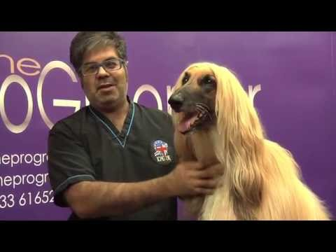How to groom an Afghan Hound - Grooming Guide - Pro Groomer