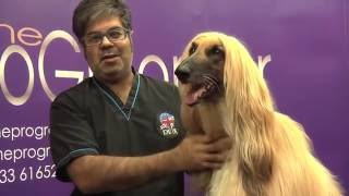 How to groom an Afghan Hound  Grooming Guide  Pro Groomer