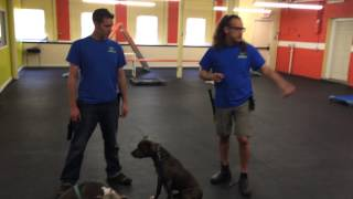 Aggressive Dog Rehab, Pit Bull Dogs