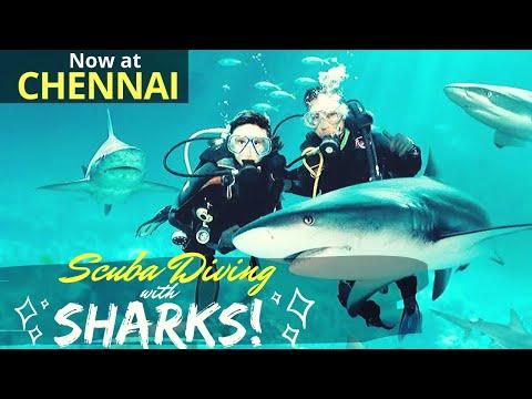 Scuba Diving with SHARKS at Chennai   4K   VGP Marine Kingdom