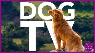 DOG TV  15 HOURS OF THE MOST ENTERTAINING VIDEO FOR DOGS!