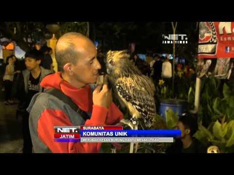 NET JATIM - Komunitas pecinta Burung Hantu di Surabaya