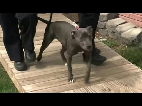 Woman And Shelter Dog Rescue Each Other | The Dodo from YouTube · Duration:  4 minutes