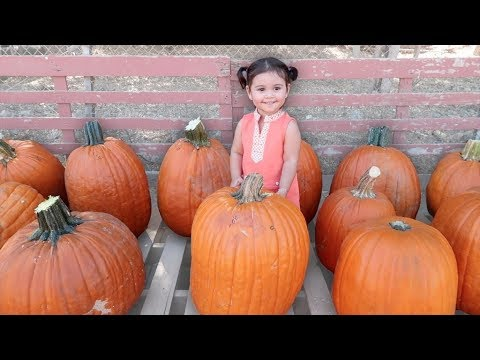Download Youtube: BABY'S FIRST PUMPKIN PATCH!!!