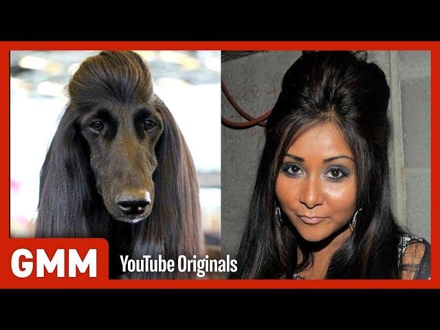 Dog Hair Or Celebrity Hair? (GAME)