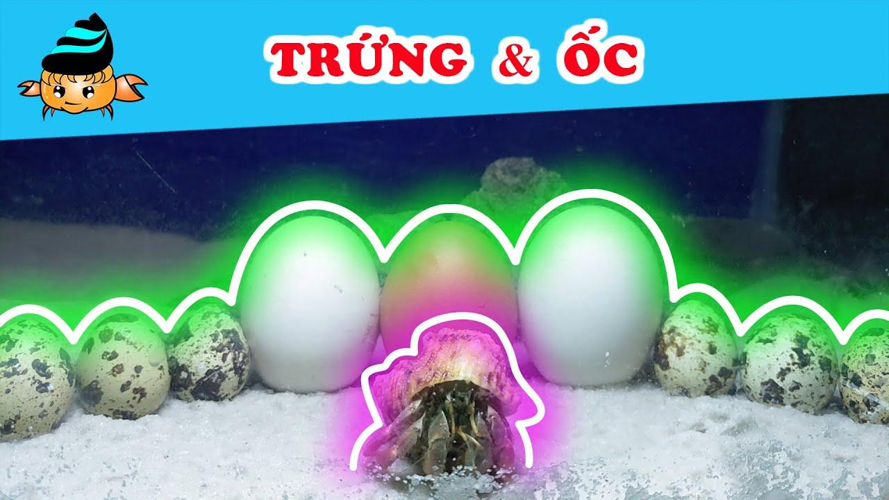 Ốc mượn hồn #23 – Trứng và ốc