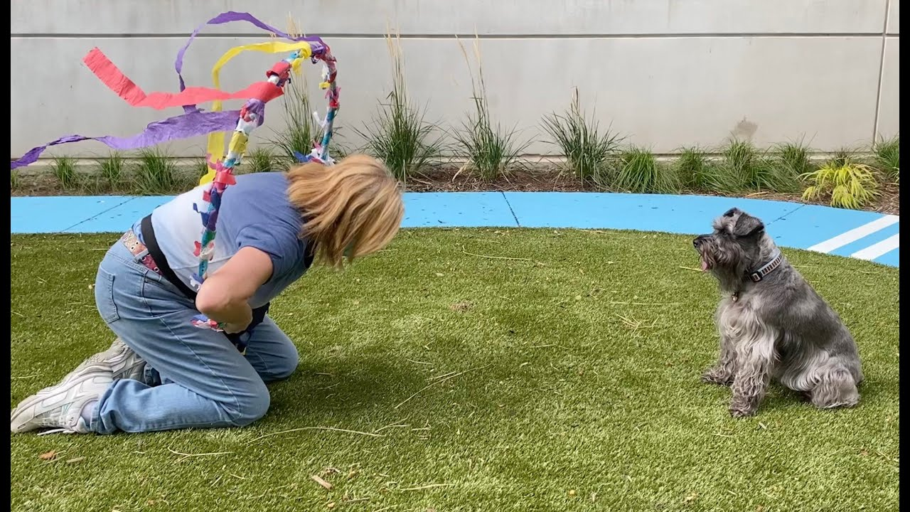 (VIDEO) Eskenazi Pet Therapy Garden is complete